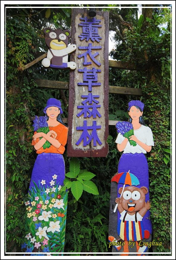 薰衣草森林(2).JPG