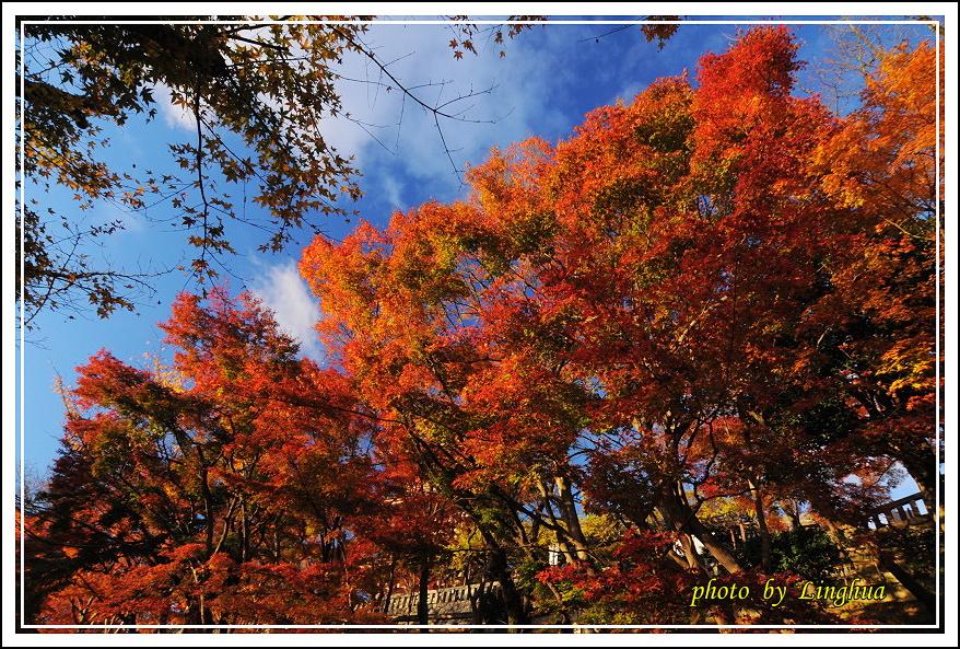2012京都清水寺(14).JPG