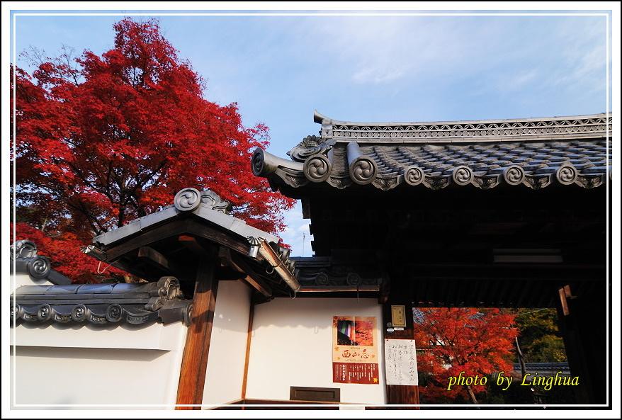 京都光明寺(2).JPG