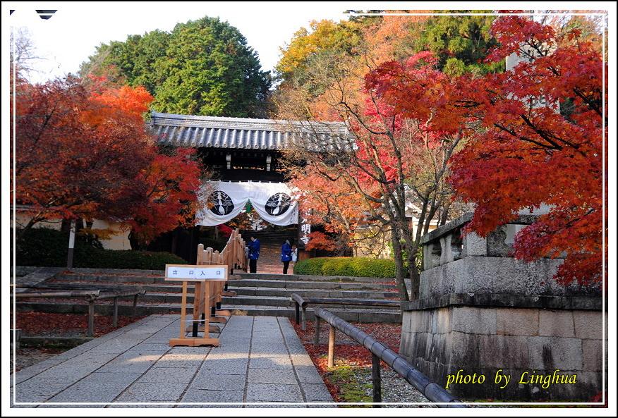 京都光明寺(3).JPG