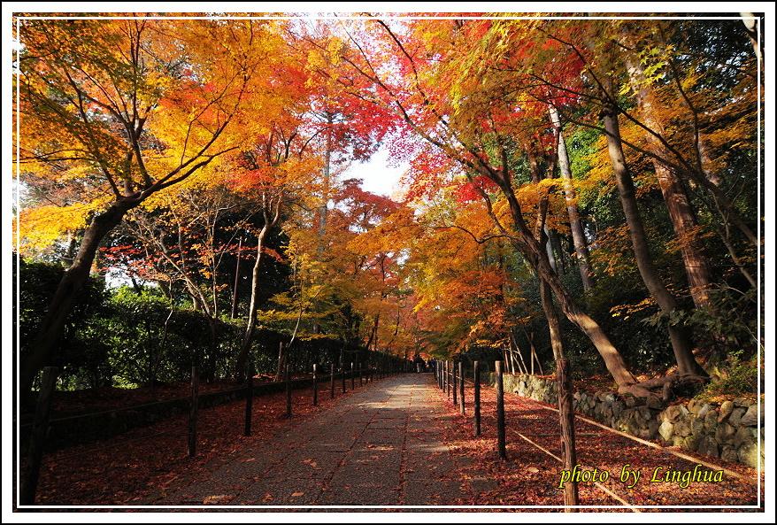 京都光明寺(4).JPG