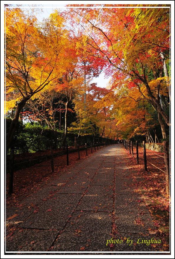 京都光明寺(5).jpg