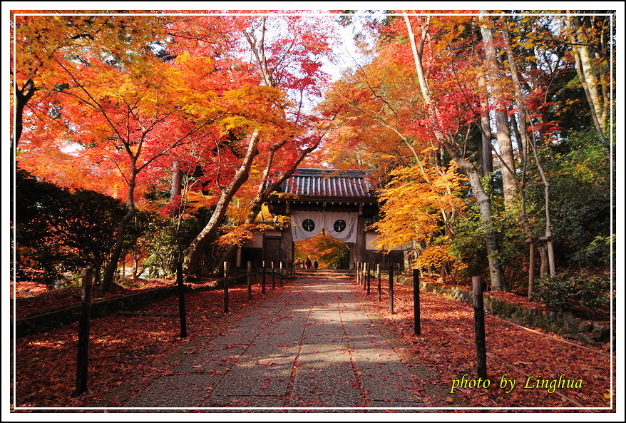 京都光明寺(6).JPG