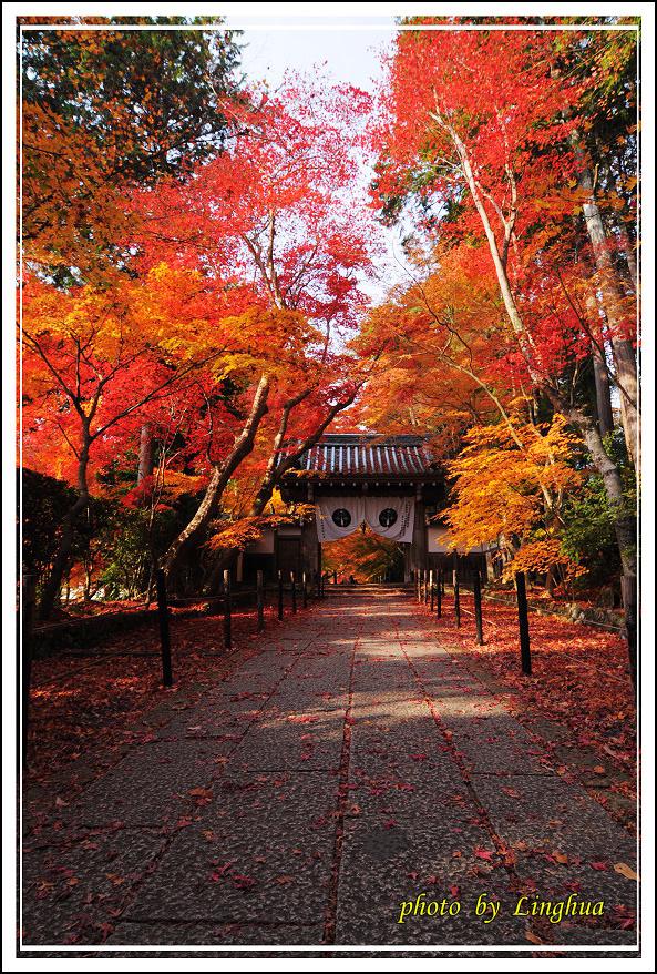 京都光明寺(7).JPG