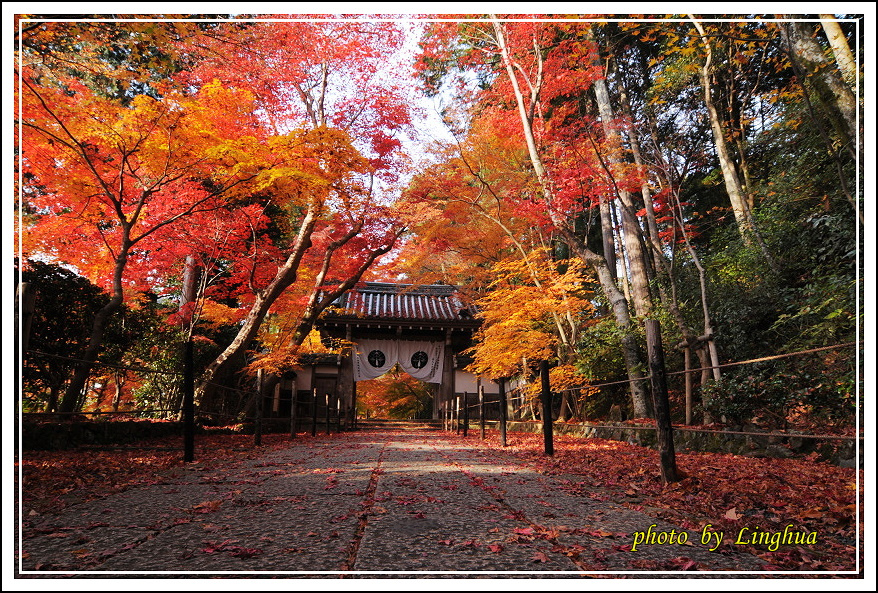 京都光明寺(8).JPG
