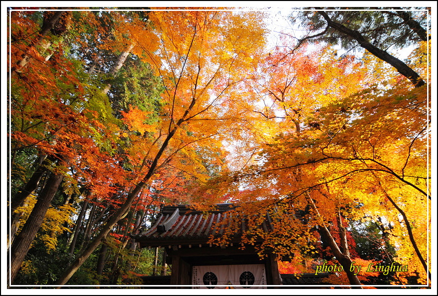 京都光明寺(9).JPG