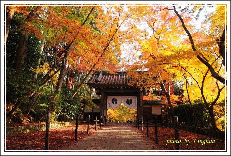 京都光明寺(10).JPG