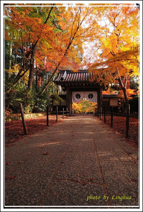 京都光明寺(11).jpg