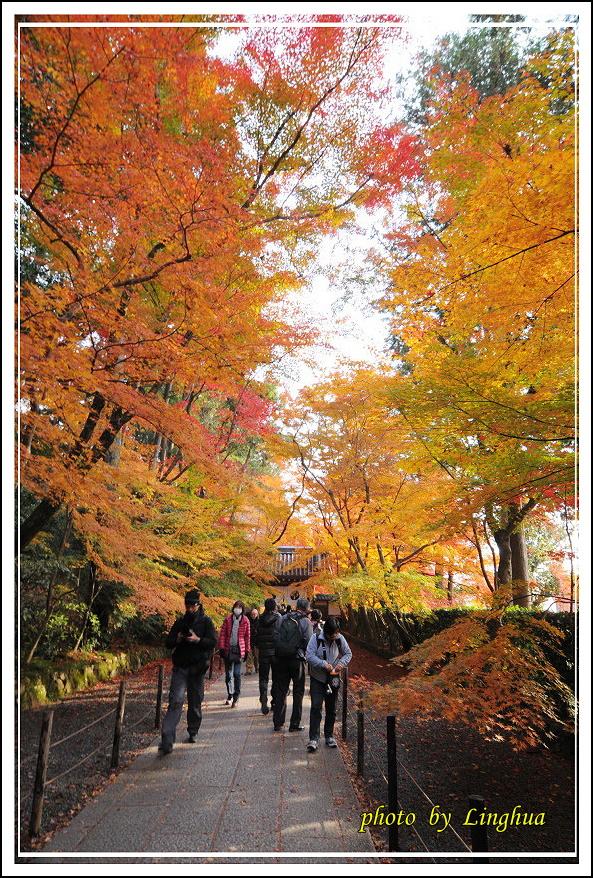 京都光明寺(12).jpg