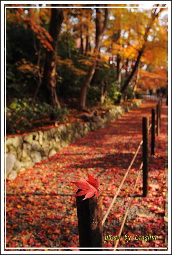京都光明寺(13).jpg