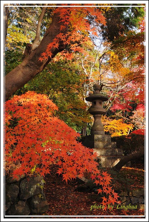 京都光明寺(14).jpg