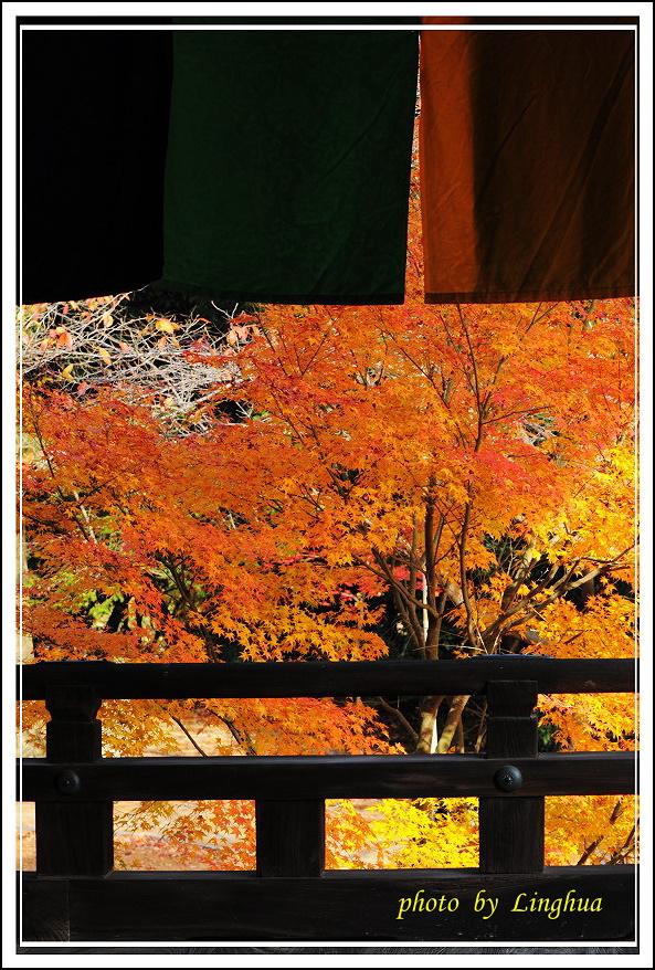 京都光明寺(23).jpg
