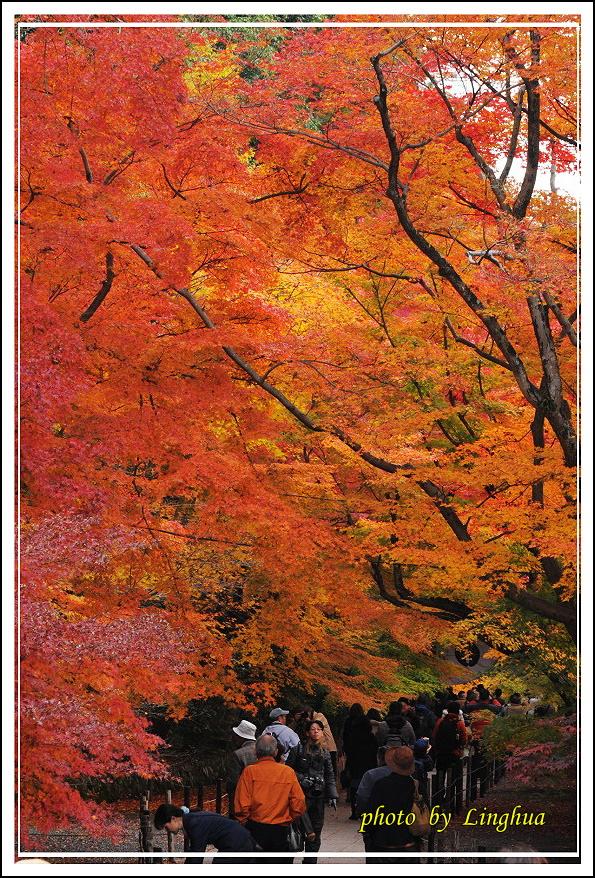 京都光明寺(27).jpg