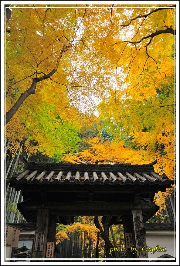 京都~衣笠山地藏院(13).JPG