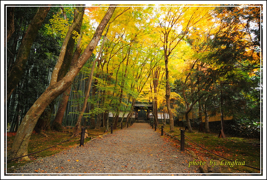 京都~衣笠山地藏院(1).JPG