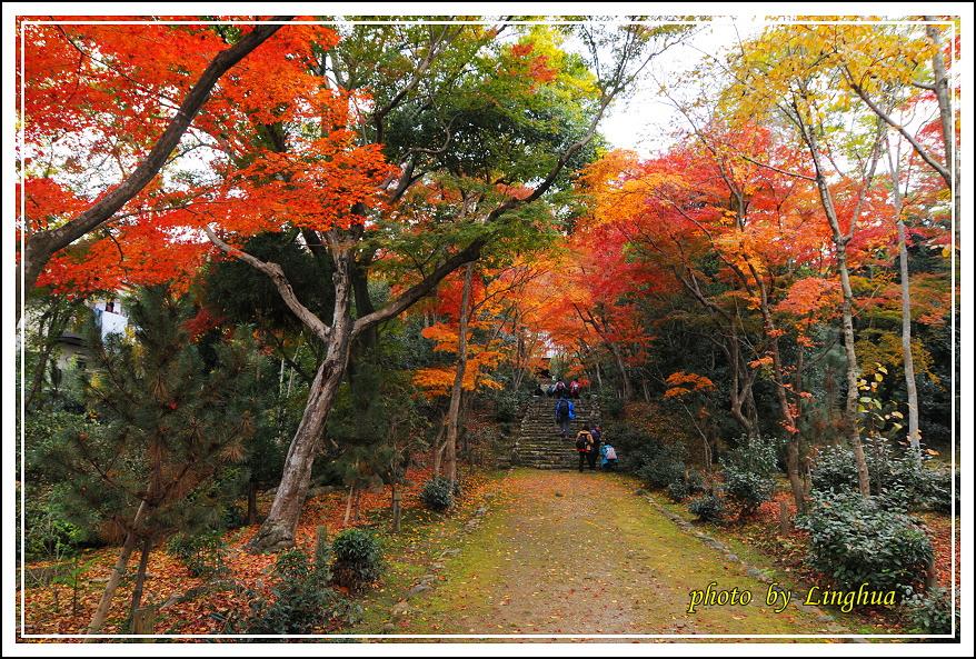 京都~衣笠山地藏院(5).JPG