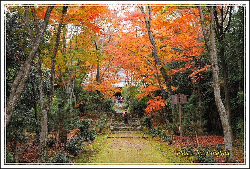 京都~衣笠山地藏院(7).JPG