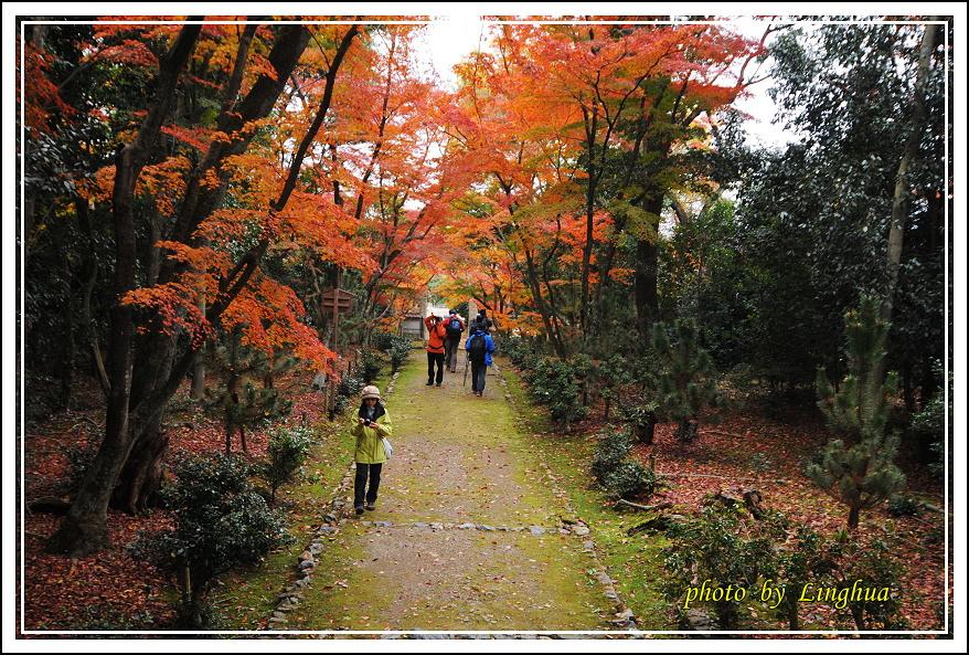 京都~衣笠山地藏院(10).JPG