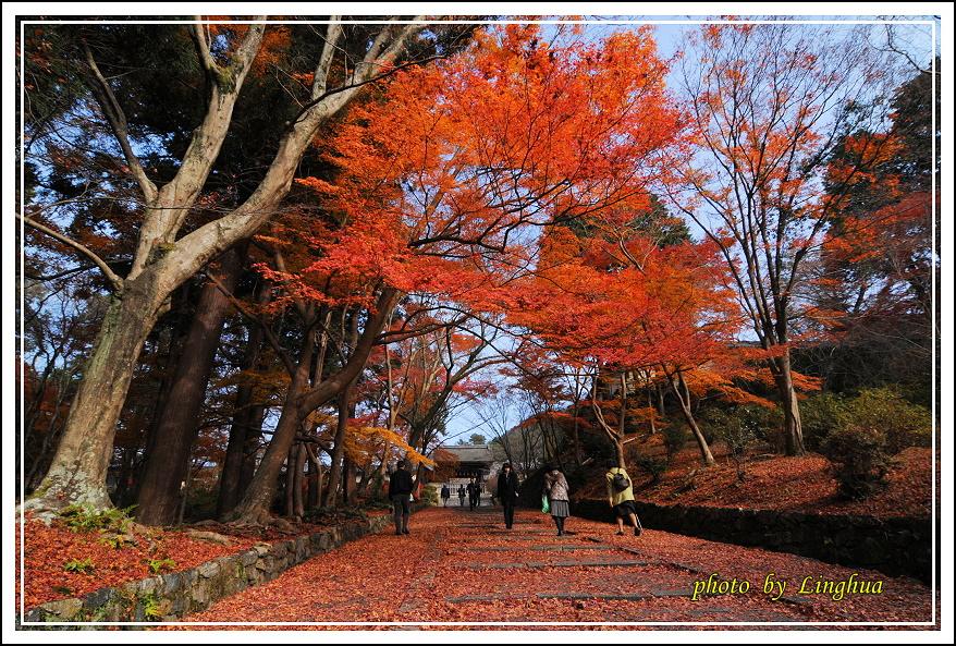京都~毘沙門堂(3).JPG