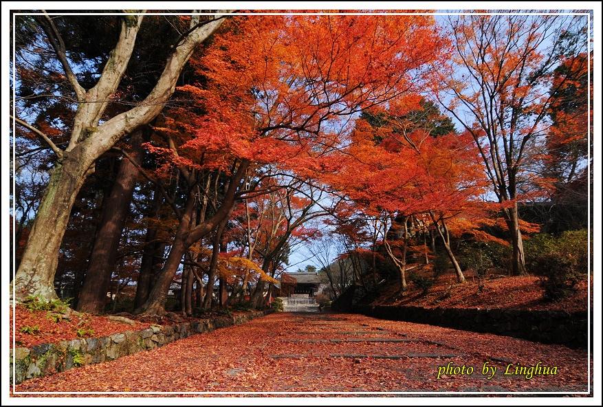 京都~毘沙門堂(4).JPG