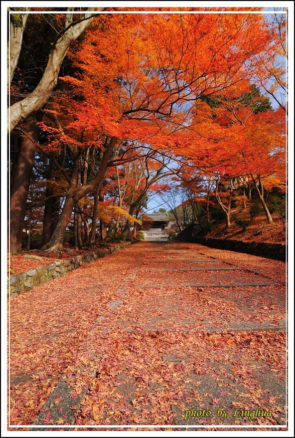 京都~毘沙門堂(5).JPG