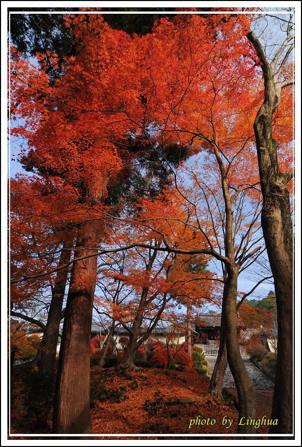 京都~毘沙門堂(6).jpg