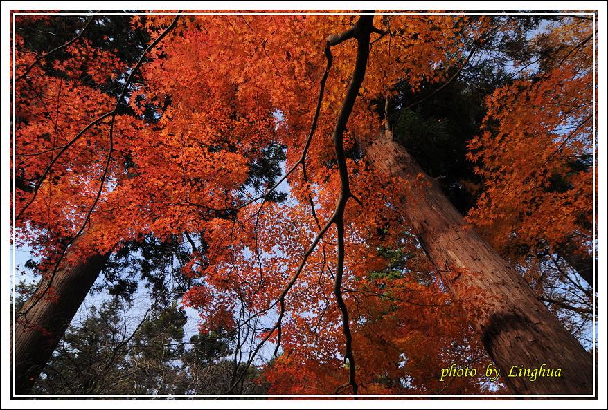 京都~毘沙門堂(7).JPG