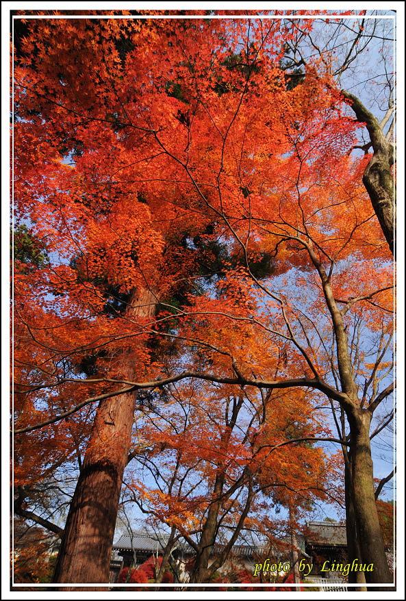 京都~毘沙門堂(8).jpg