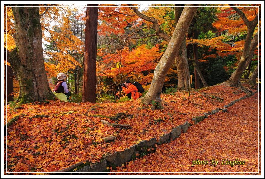 京都~毘沙門堂(11).JPG