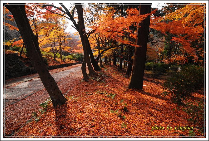 京都~毘沙門堂(12).JPG
