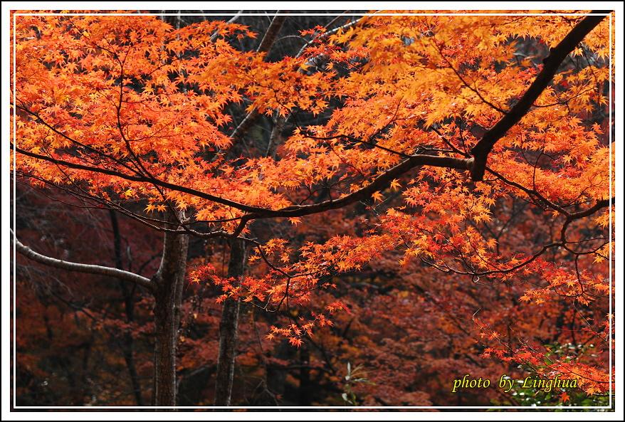 京都~毘沙門堂(14).JPG