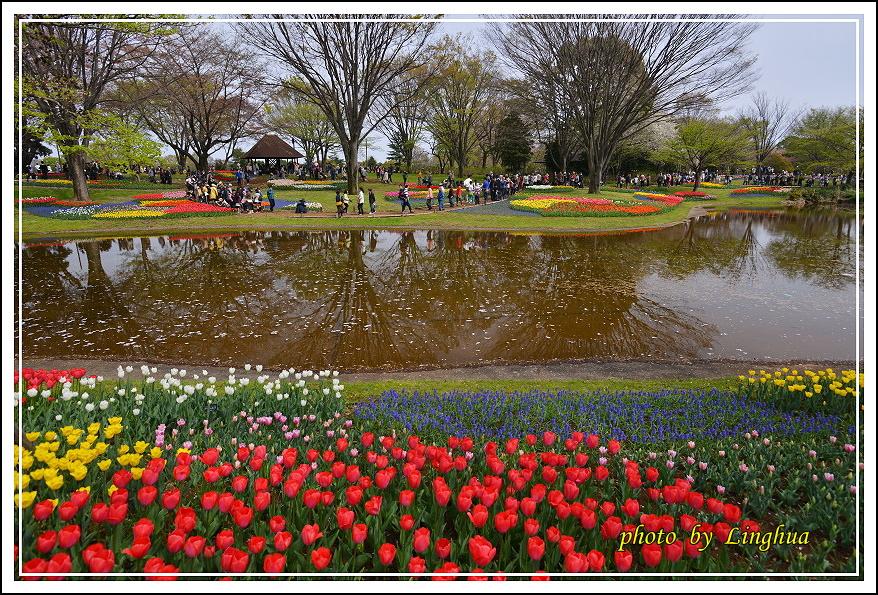 日本昭和紀念公園(2).JPG