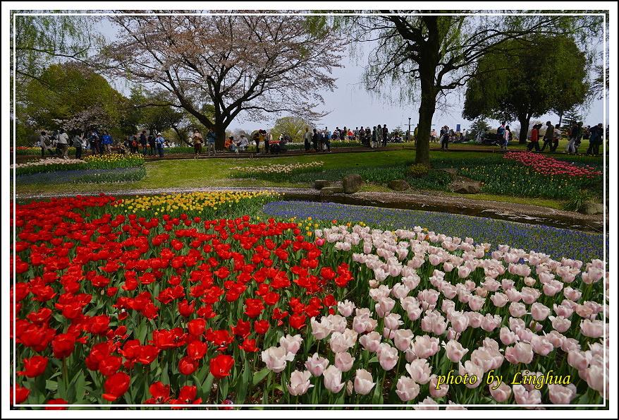 日本昭和紀念公園(5).JPG