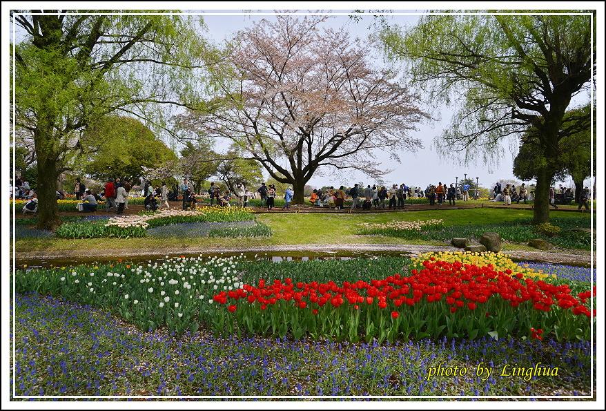日本昭和紀念公園(6).JPG