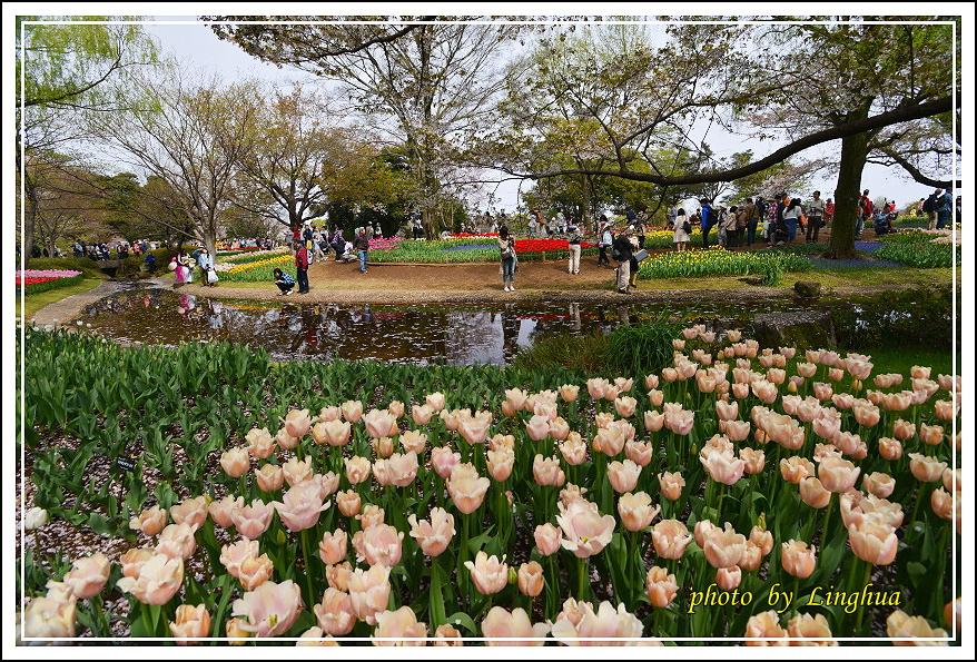 日本昭和紀念公園(7).JPG