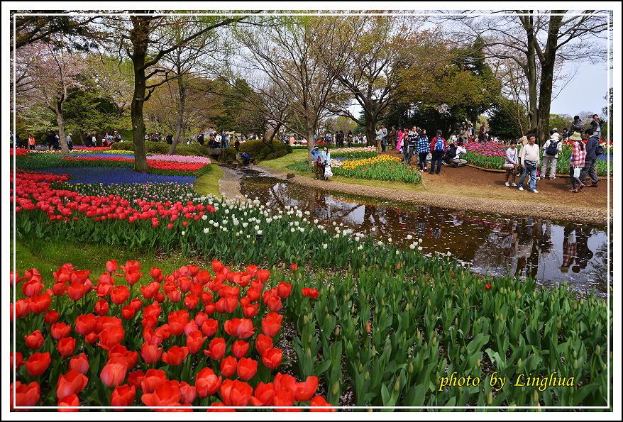 日本昭和紀念公園(8).JPG