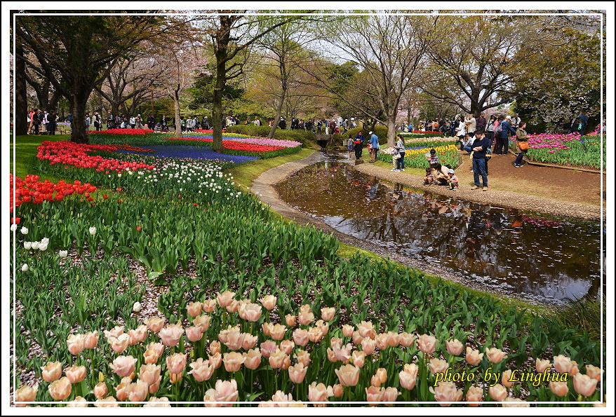 日本昭和紀念公園(9).JPG