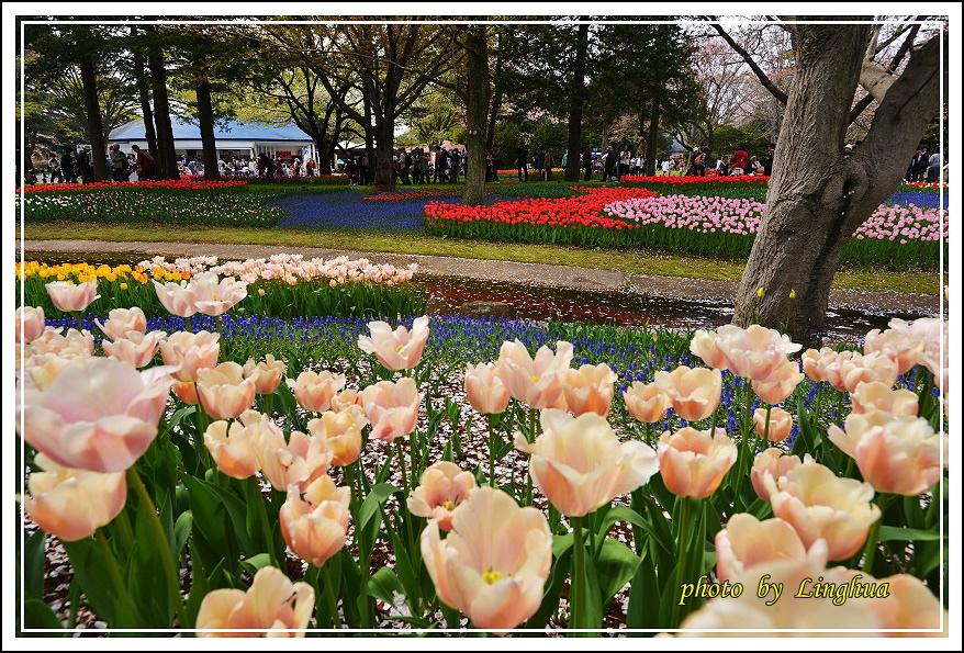日本昭和紀念公園(12).JPG
