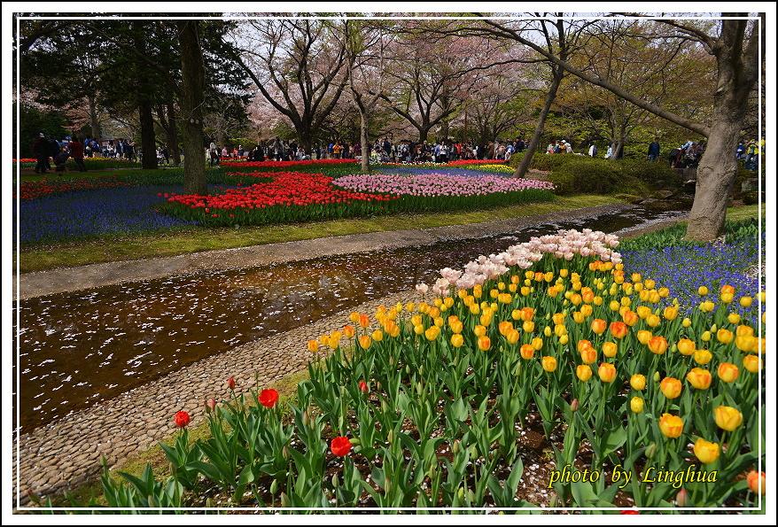 日本昭和紀念公園(13).JPG