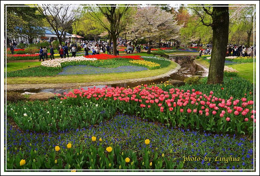 日本昭和紀念公園(16).JPG
