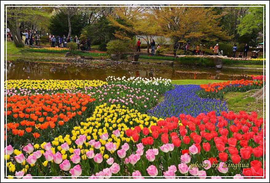 日本昭和紀念公園(18).JPG