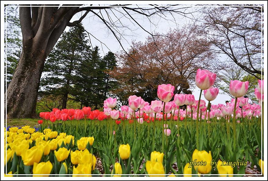 日本昭和紀念公園(19).JPG