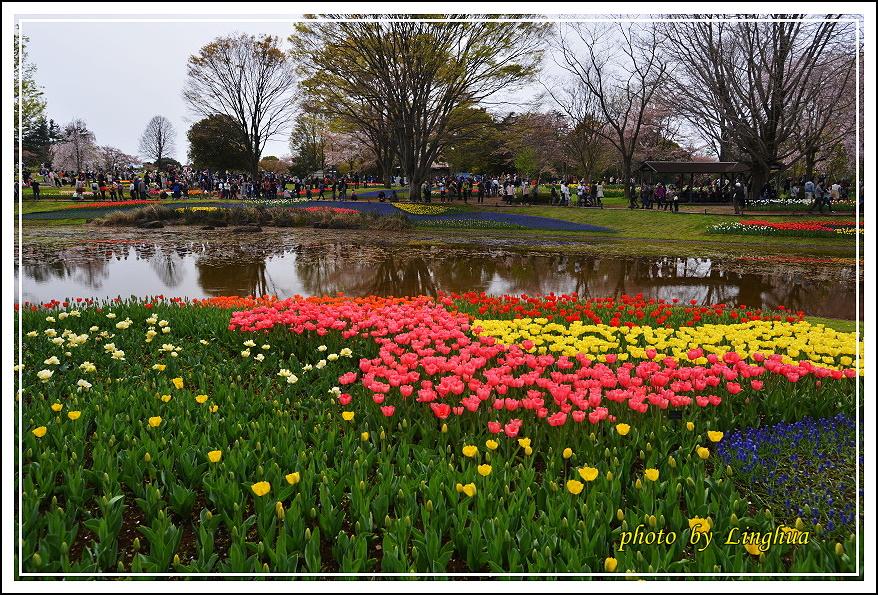 日本昭和紀念公園(21).JPG