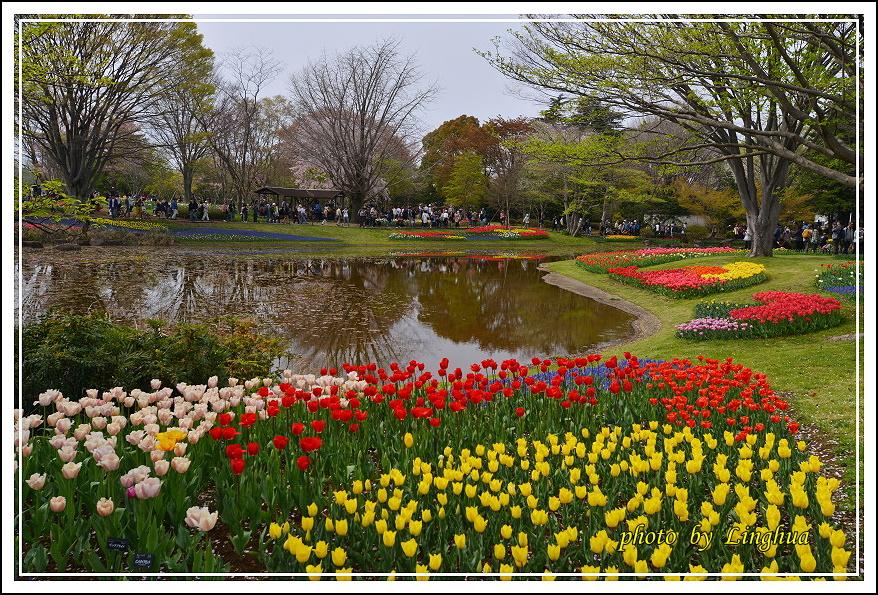 日本昭和紀念公園(22).JPG