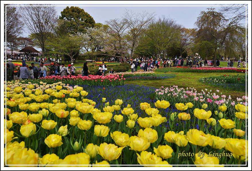 日本昭和紀念公園(24).JPG