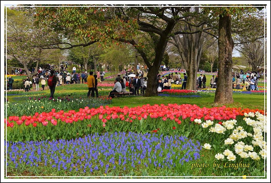 日本昭和紀念公園(26).JPG