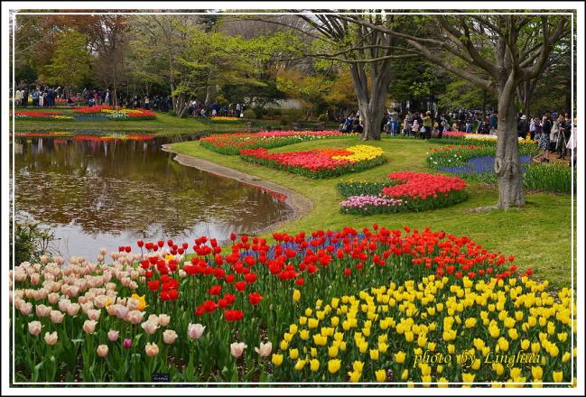 日本昭和紀念公園(30).JPG