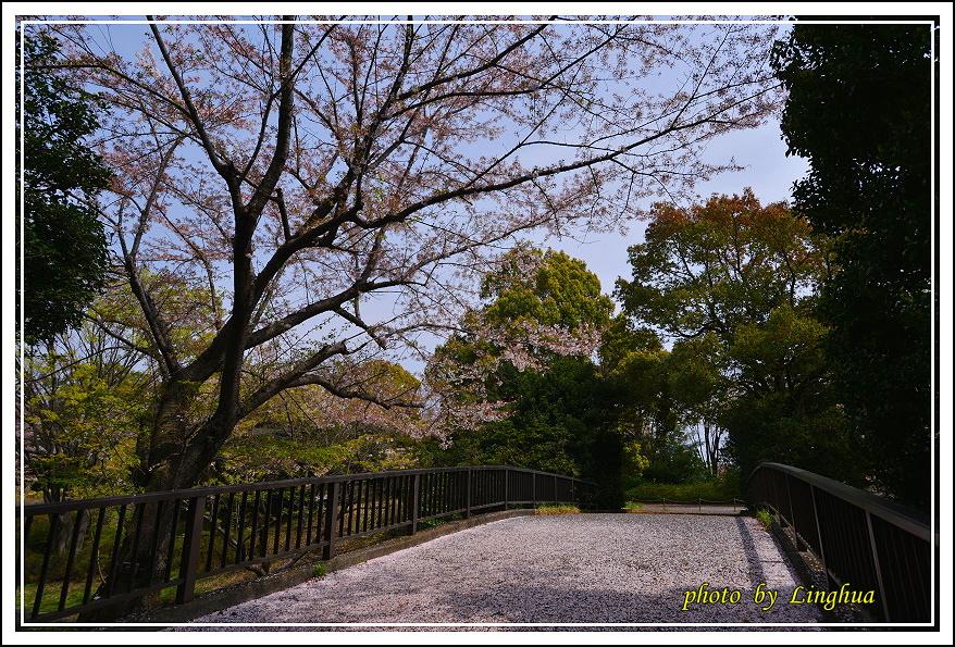 昭和公園2 Sakurahana(10).JPG