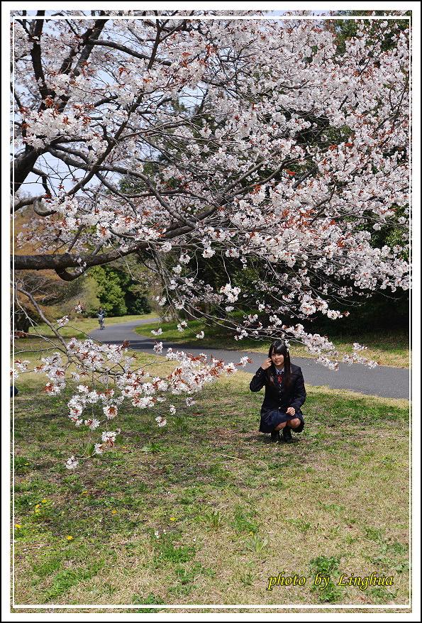 昭和公園2 Sakurahana(16).JPG
