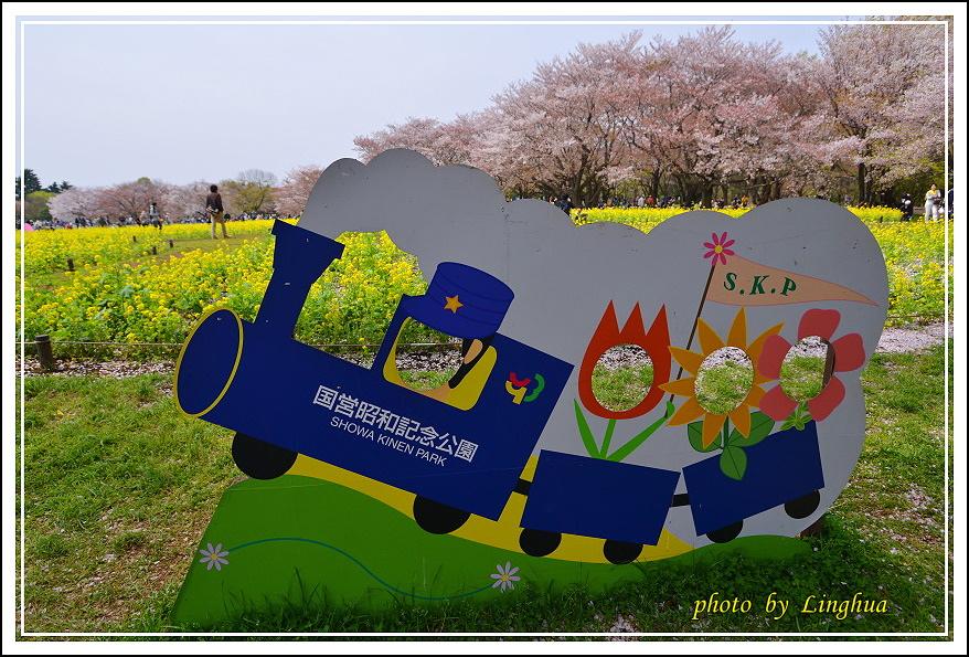 昭和公園2 Sakurahana(22).JPG